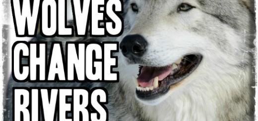 Cum lupii schimba raurile
