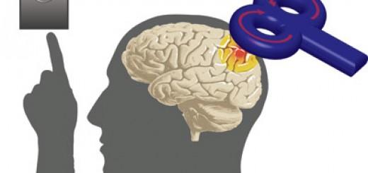 Creierul se comporta neobisnuit la prezenta unui magnet urias