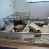 Un spatiu modular de joaca pentru animalele tale de companie, proiect cu magneti